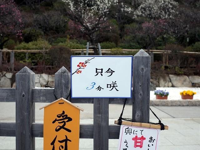 ikebai201902k06.JPG